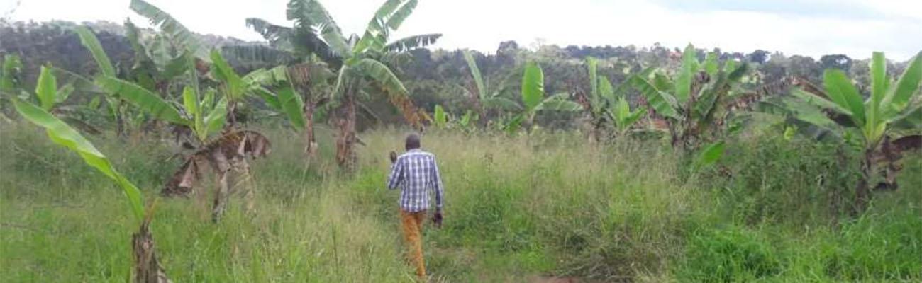 La Uganda que nos oculta Idi Amin