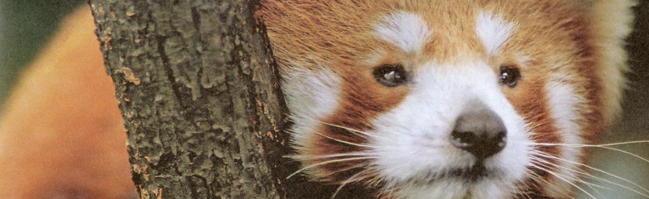 El nuevo zoológico | En libertad vigilada