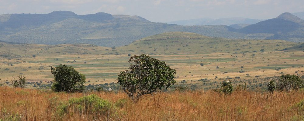 El mundo Bóer | Festejo y drama en Sudáfrica